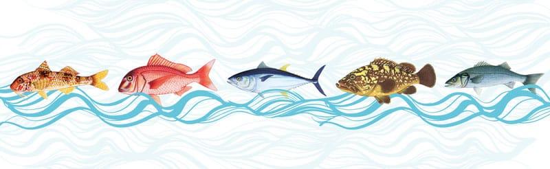 fishtips