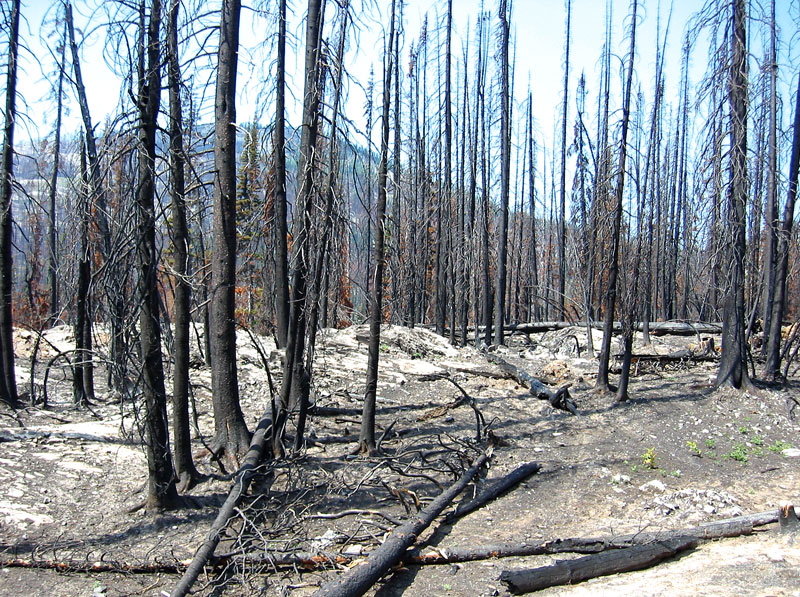 Forest_fire_aftermath