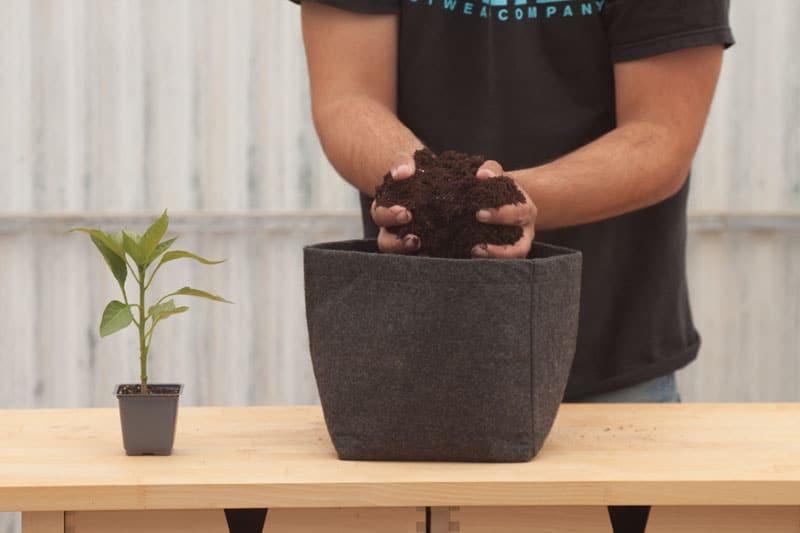 piperia florinis soil