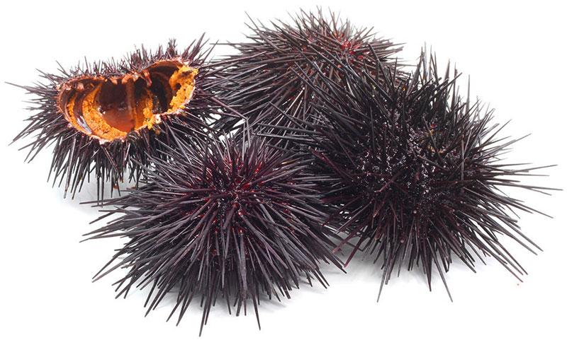 sea urchin-Οδηγός προστασίας: Υγιές δέρμα το καλοκαίρι-naturanrg