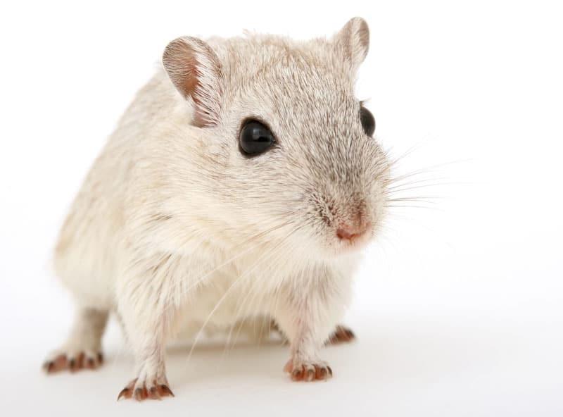 Πειράματα σε ζώα: Η σκοτεινή πλευρά της επιστήμης