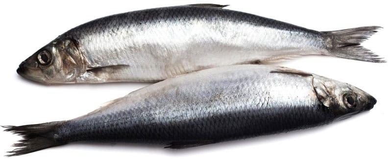 bass-fish-food