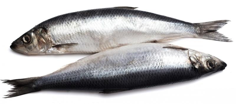 fish-H αλφαβήτα της υγείας! Μάθε την απ' έξω και νιώσε ευεξία.-naturanrg