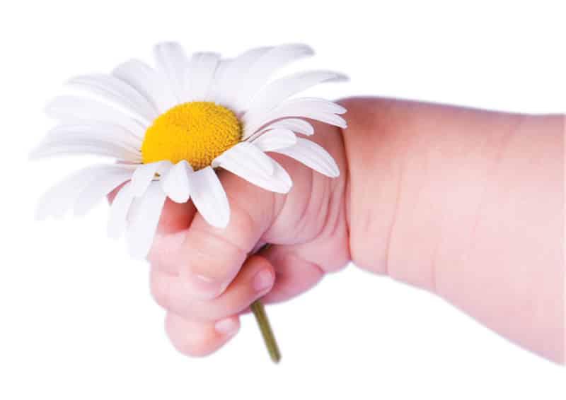 chamomile-Προστατέψτε το δέρμα του μωρού σας-naturanrg