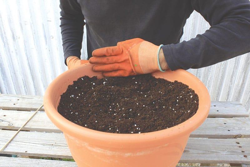 tomato_soil