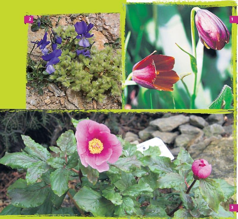 flowers-Άνοιξη. Η ελληνική φύση στα καλύτερά της!