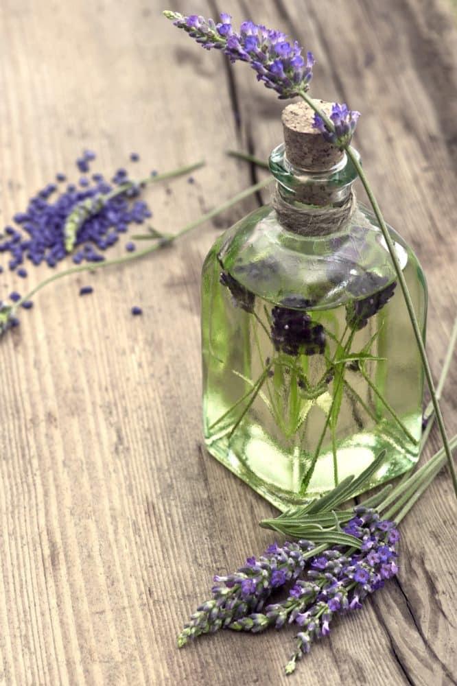 lavender_oil