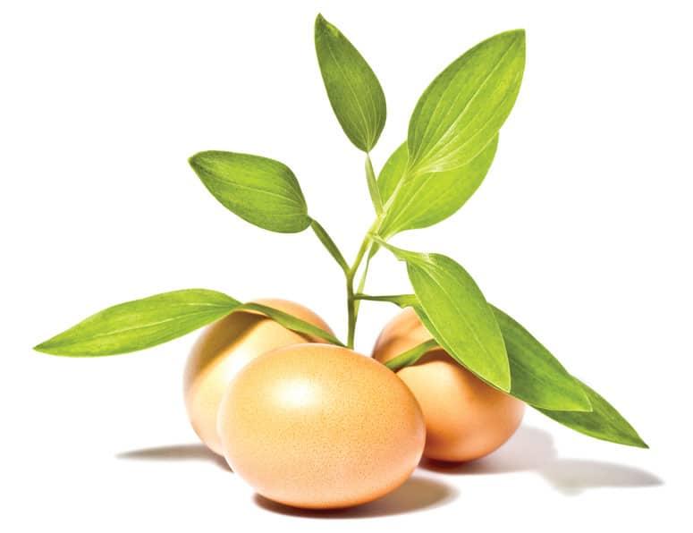 eggs_bio