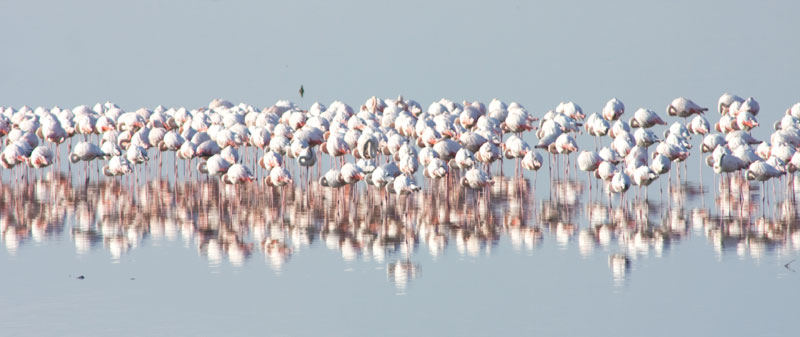 flamingo_lake kerkini