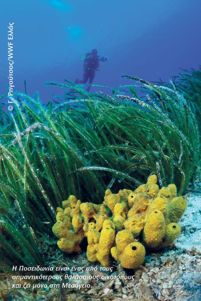 poseidonia - Εξερευνώντας τα υποβρύχια μονοπάτια του Αιγαίου