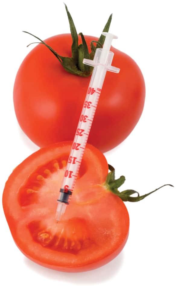 Τα «μεταλλαγμένα» στην πόρτα μας-tomato-gmo-naturanrg