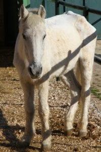 Κακοποίηση αλόγων: Όταν η θηλιά διαδέχεται το σαμάρι