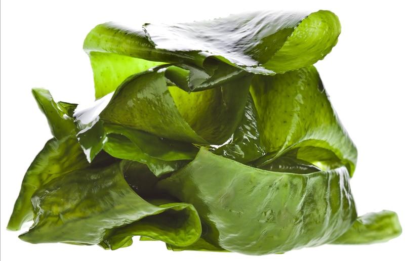 kombu-algae