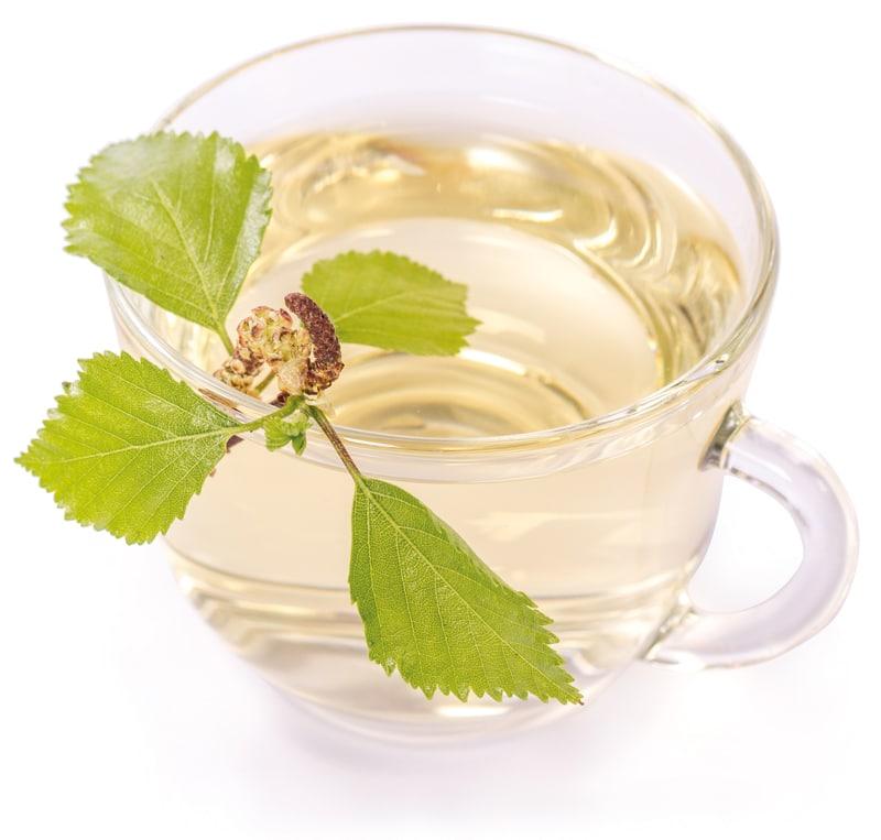 birch-tea