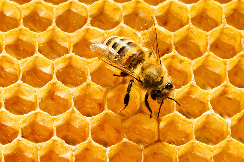 Health-Benefits-of-Royal-Jelly-bee