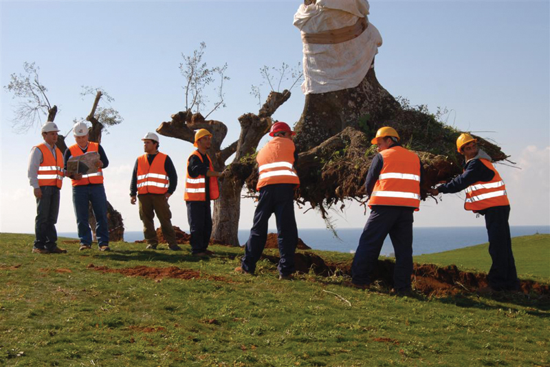 Olive-Trees-Transplant-Program-Costa Navarino. Ουδέν... καλόν αμιγές κακού!