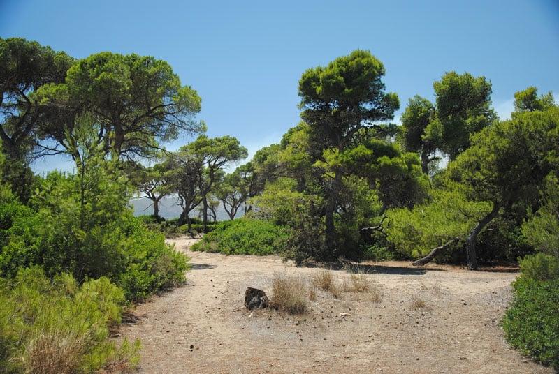 forest_sxinias_marathon_attica_003
