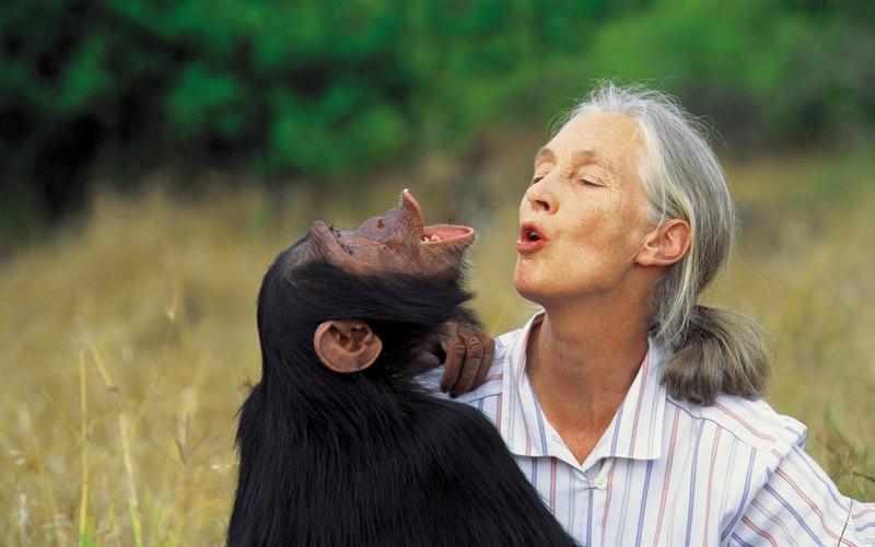 NaturaNrg#78-Goodall4-Jane Goodall