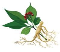 NaturaNrg#79-votana-ginseng-Στρες. Μάγισσες, φέρτε βότανα!