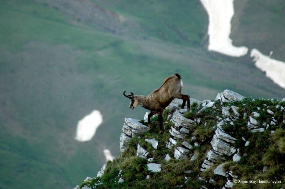 Η κοιλάδα του Μόρνου να κηρυχτεί το πρώτο Τοπίο Άγριας Φύσης στην Ελλάδα